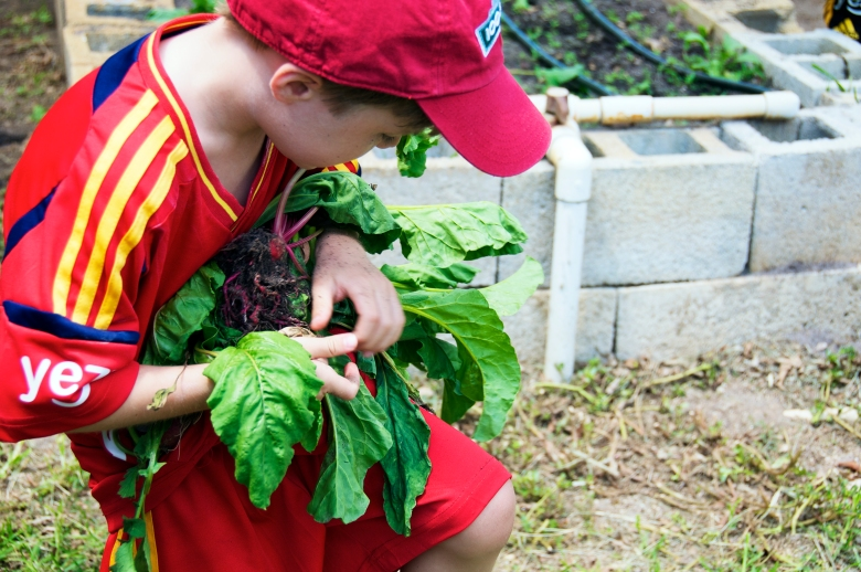 boy picking fresh vegetables on the farm