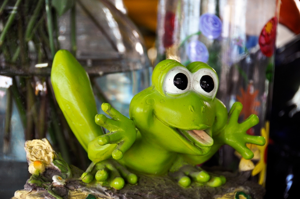 a frog for good luck!