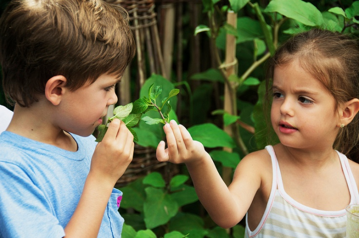 learning about herbs