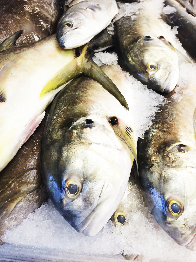 fish fo rme