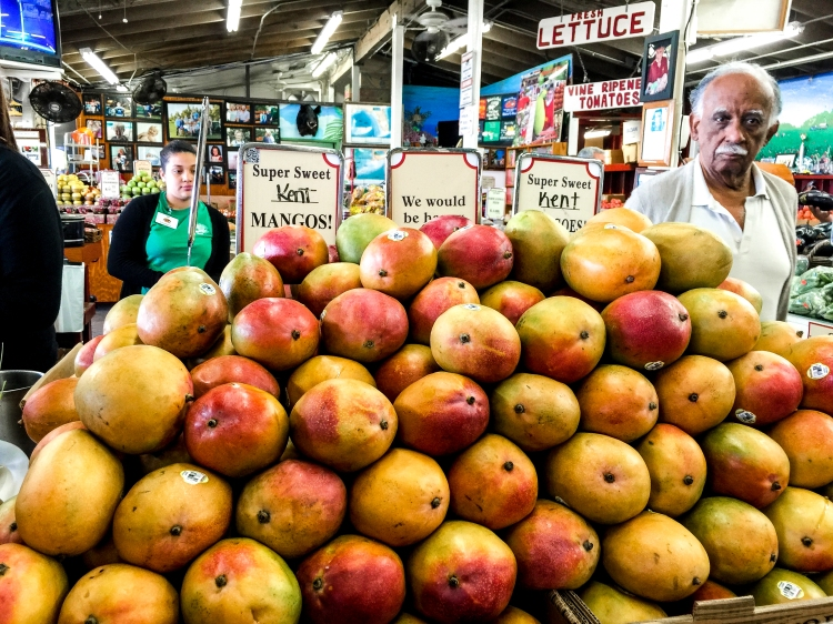 Daddy looking for mangoes