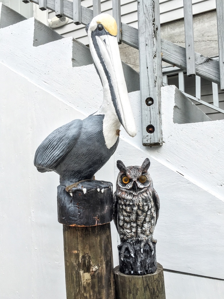 pelican and owl