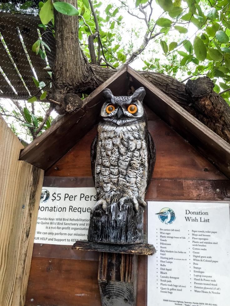 wild bird sanctuary 13