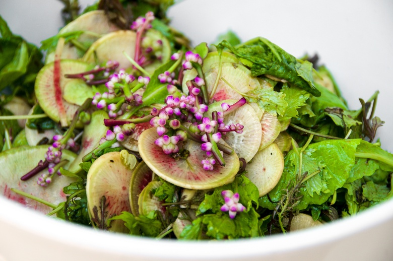 Brassica Green Salad with Shaved Radishes