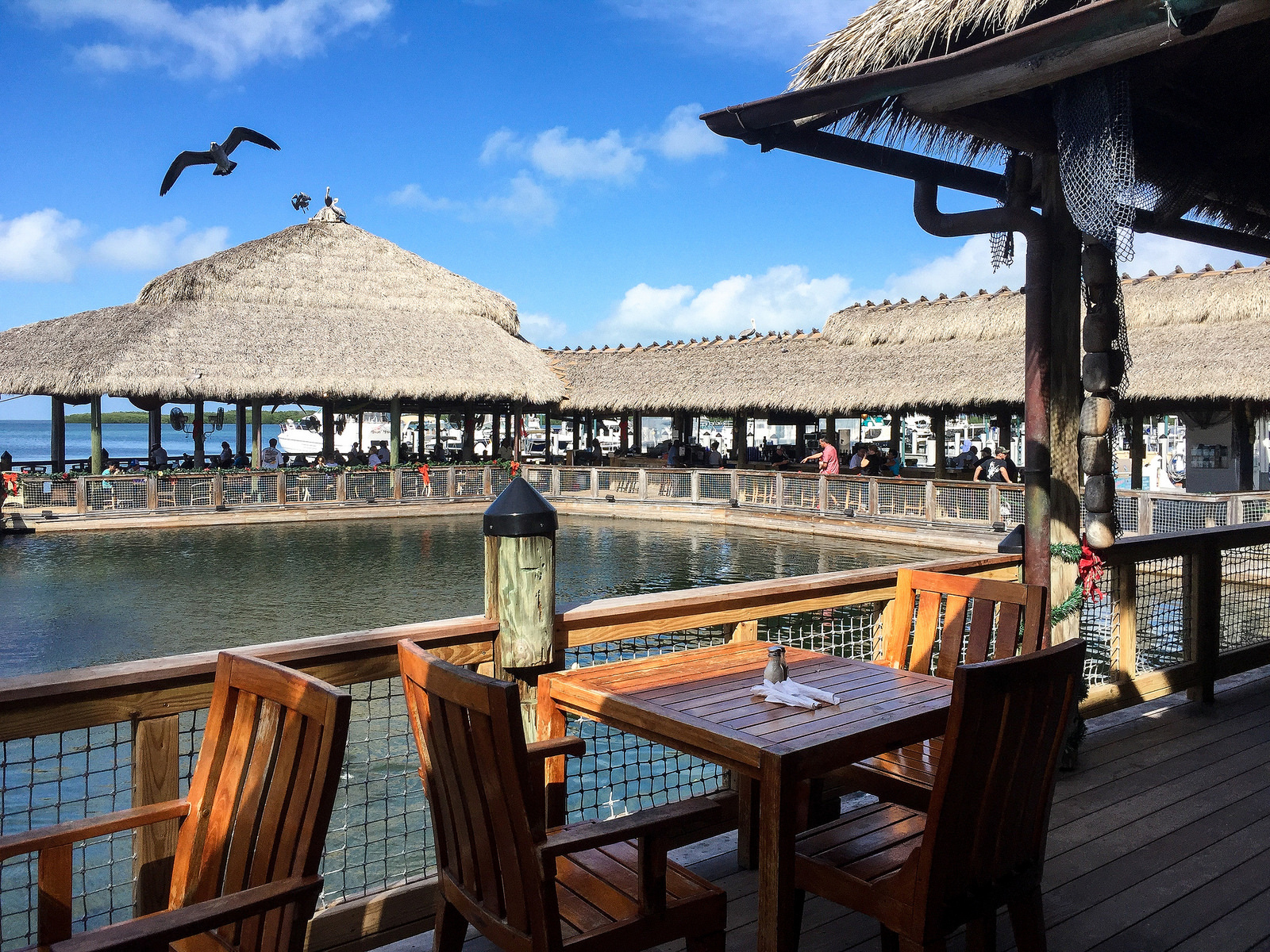 Fun lunch at islamorada fish company restaurant masala for How much does a fishing license cost in texas